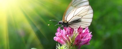 butterfly-1140x460